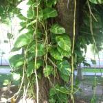 image00416