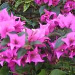 image00728