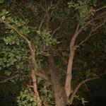 image00740